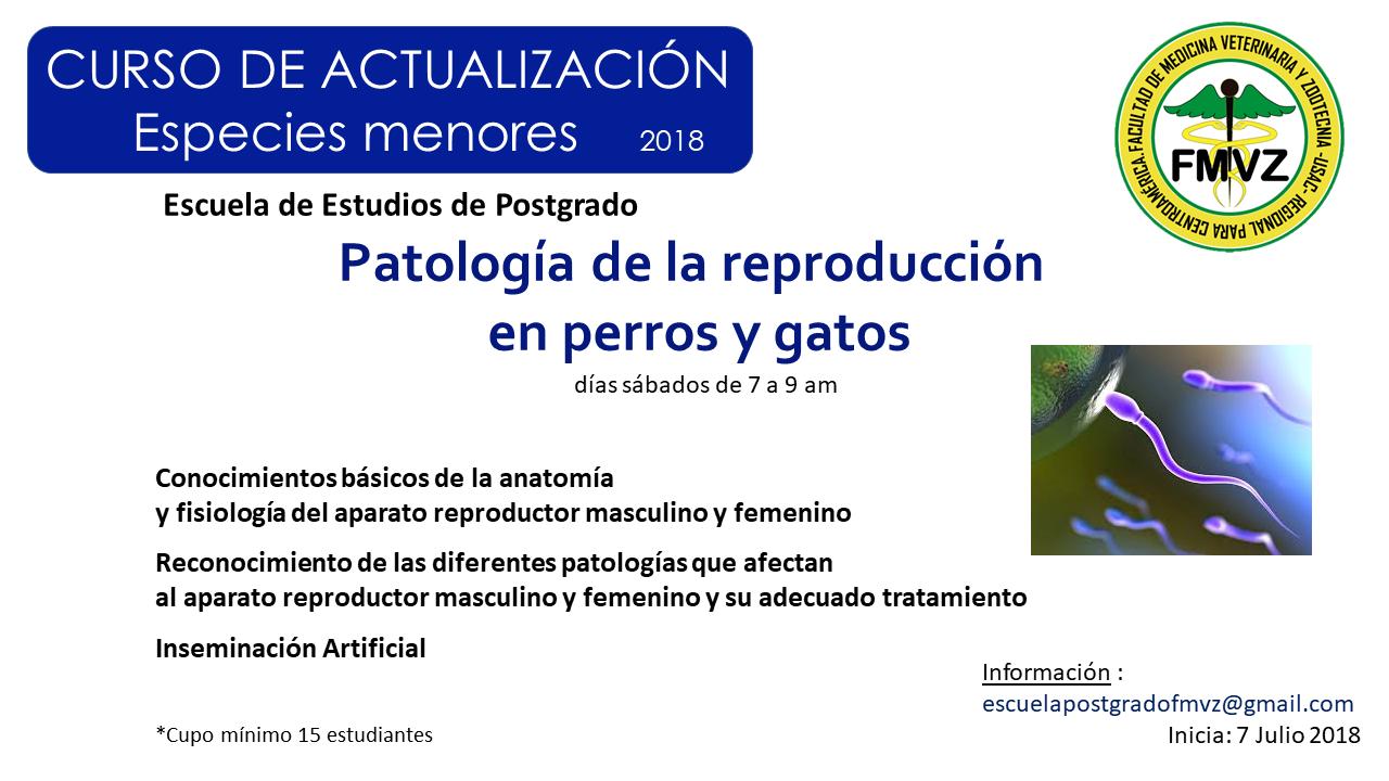 Patología de la reproducción perros y gatos EEP FMVZ – EEP FMVZ USAC